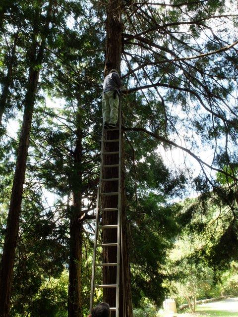 ツリーハウスの作り方 樹木